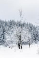 Schnee im Erzgebirge bei Altenberg