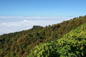 fog and cloud  on mountain at Kew Mae Pan ,Doi Inthanon National Park, Thailand.