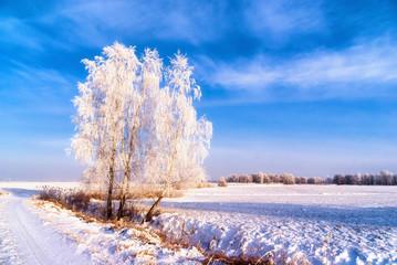 Podlasie zimą