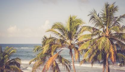 Palmen und blauer Himmel, Sri Lanka, Breitbild retro