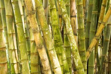 Bambushölzer in Sri Lanka