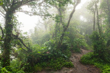 Deep in lush foggy rainforest