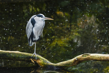 a heron on a stick