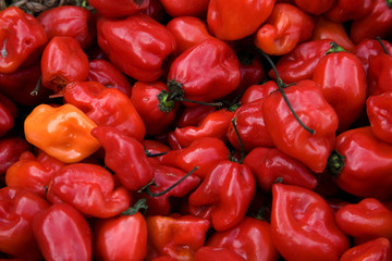 Bright Red Habanero Chili Peppers