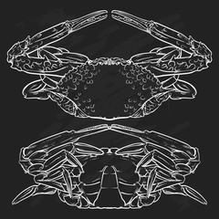 Crab drawing on black background. Hand drawn outline seafood ill