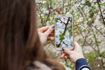 young woman takes photo on smartphone blooming spring tree