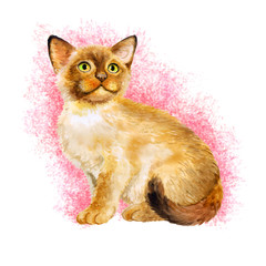 Watercolor portrait of Sacred birman kitten, Sacred cat of Burma isolated on pink background. Hand drawn sweet home pet. Bright colors, realistic look. Emerald eyes. Greeting card design. Clip art