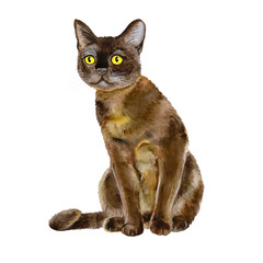 Watercolor portrait of American Bombay shorthair cat isolated on white background. Hand drawn sweet home pet. Bright colors, realistic look. Yellow eyes. Greeting card design. Clip art. Add any text