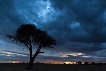 Sunset shot of an Acacia tree silhouetted with very dramatic blue sunset sky in the background. Taken in Kenya.