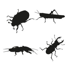 Insects on a white background.