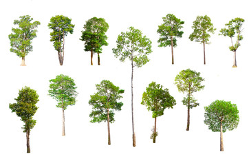 Isolated trees on white background , Trees collection.