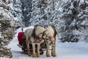 Winter Sleigh Ride in the Canadian Rockies