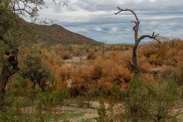 Salt River of Arizona USA