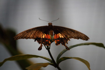 Fotoväggar - braun gelber Schmetterling