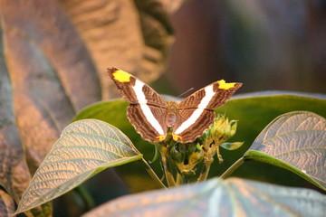 Fotoväggar - Schmetterling mit lila Streifen