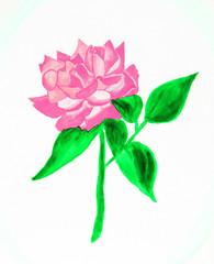 Pink rose, painting