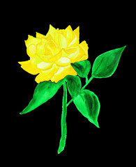 Yellow rose, painting