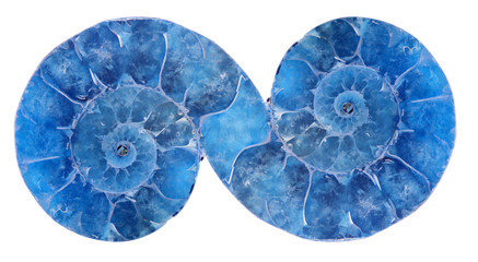 decoration from blue ammonite on white
