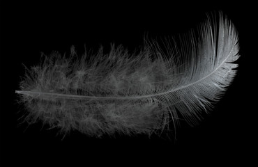 single light feather on black background