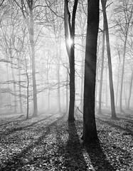 Kahler Buchenwald im Winter, Sonnenstrahlen dringen durch Nebel, Schwarz-Weiß