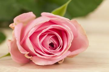 rosa Rose auf einem Holzhintergrund