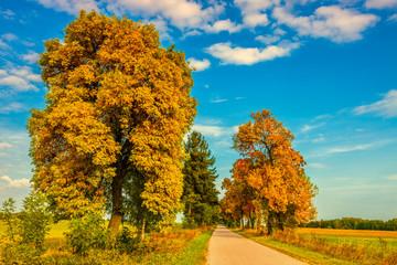 Fototapeta jesień na Podlasiu obraz