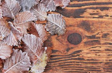 Ulmenblätter mit Eiskristallen im Winter auf Holz, Frost, eiskalt, Kälte, bizarr, gefroren
