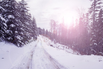 Winter landscape with setting pink sun. The coniferous forest with snow
