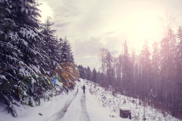 Winter landscape with setting orange sun. The coniferous forest with snow. The wanderer on the trail