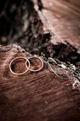 Wedding rings lying on a tree stump in the woods.