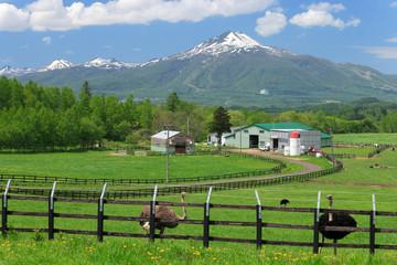 春の羊蹄山麓