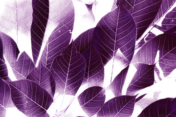The Purple leaves background.By using the program included two images together