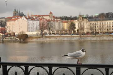 Action in Prague