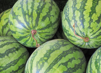 Big sweet green water melon on the market, Fruit background