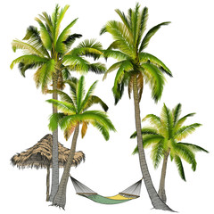 Palm trees with hammock.