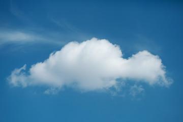 Beautiful single white on blue sky