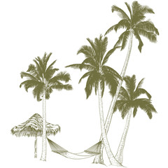 .Palm trees with hammock.