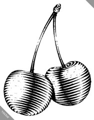 Engraved isolated vector illustration of a cherry