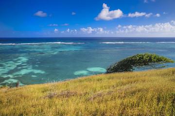 Oceanside coral reef