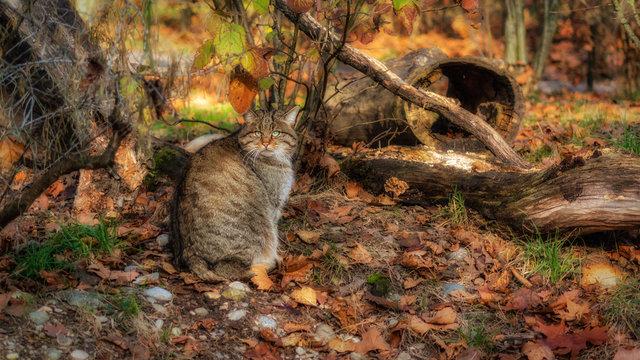 Wildkatze Lange Erlen