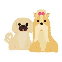 cartoon cute dogs icon over white background. coloful design. vector illustration