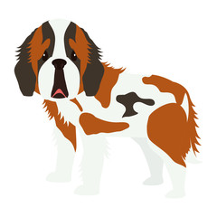 cartoon cute st bernard dog icon over white background. coloful design. vector illustration