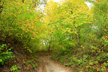 autumnal colors with forest road and trees bushes