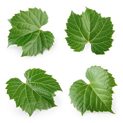Fresh raw grape leaves isolated on white. Collection.