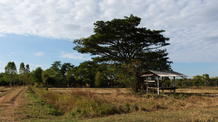 panoramic views of hut on cornfield . farm of farmer at countryside in thailand.