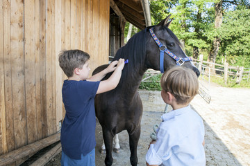 Two boys grooming horse together