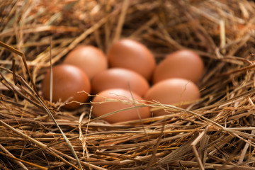 close up of eggs in chicken nest. shallow depth of field, blurred focus on egg.