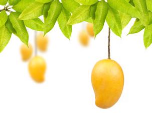 Mango fruit with leaves isolated