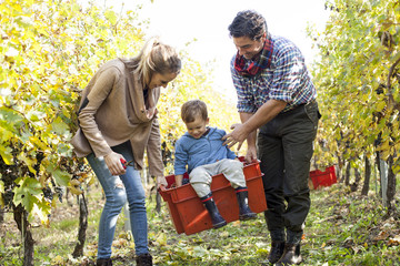 Mother and father carrying their son in red box through vineyard