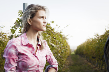 Young woman harvesting grapes in vineyard